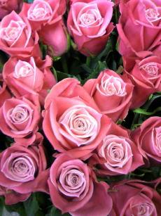 rose タージマハル