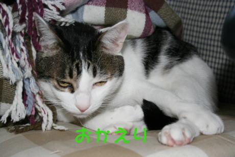IMG_5311きじ