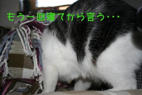 IMG_5319きじ4
