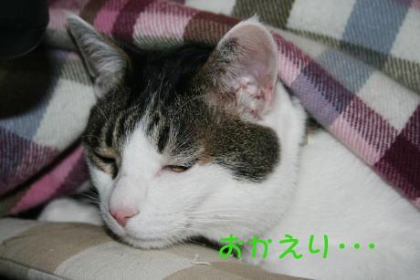 IMG_5343きじ