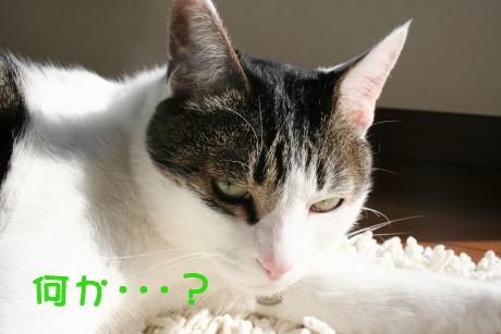 IMG_5361きじ7