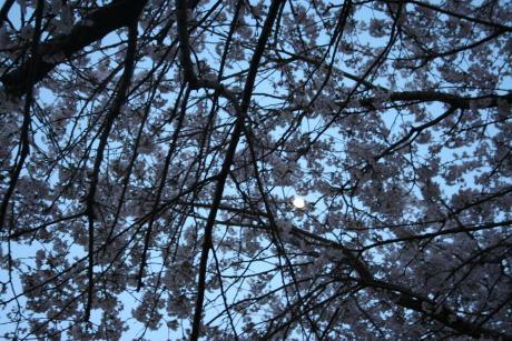 IMG_5385夜桜2
