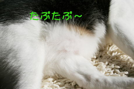 IMG_5369きじ腹