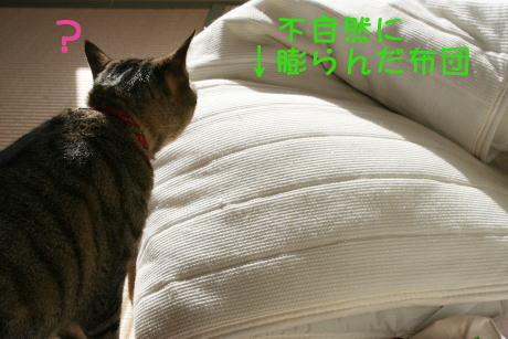 IMG_5531きじとトラ