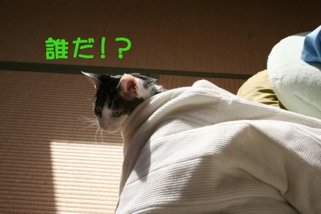 IMG_5533きじ1