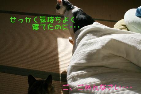 IMG_5534きじとトラ3