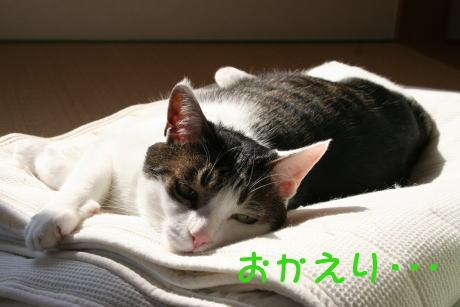IMG_5600きじ1