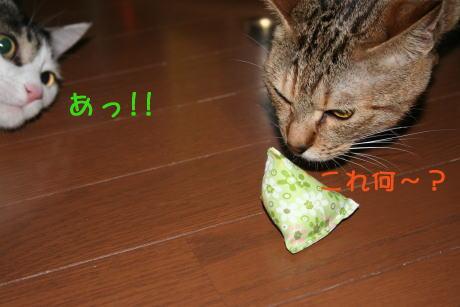 IMG_5682きじとコムギ