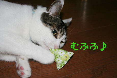 IMG_5684きじ4