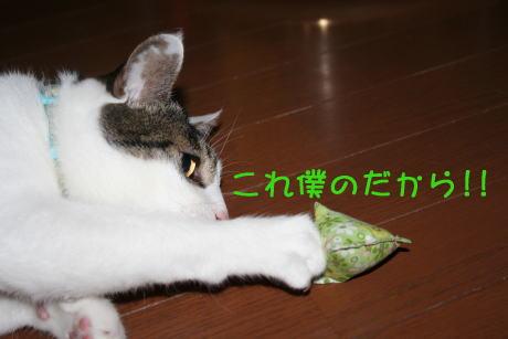 IMG_5683きじ3