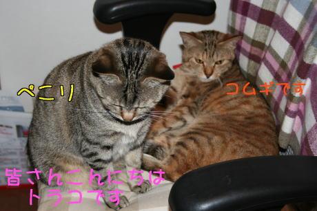 IMG_5602トラコとコムギ1