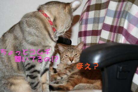 IMG_5607トラコとコムギ5