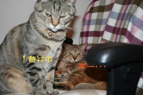 IMG_5604トラコとコムギ3