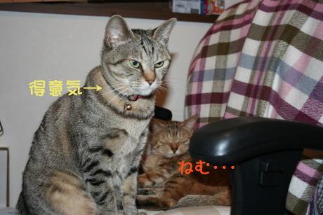 IMG_5606トラコとコムギ4