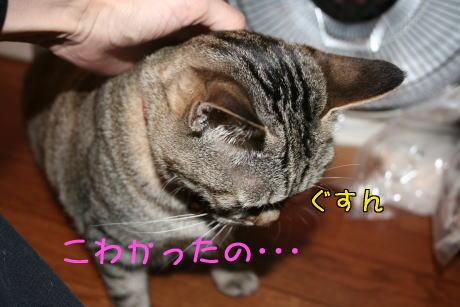IMG_5748トラコ3