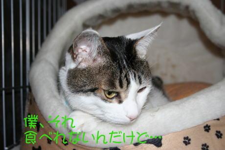 IMG_5766きじ1