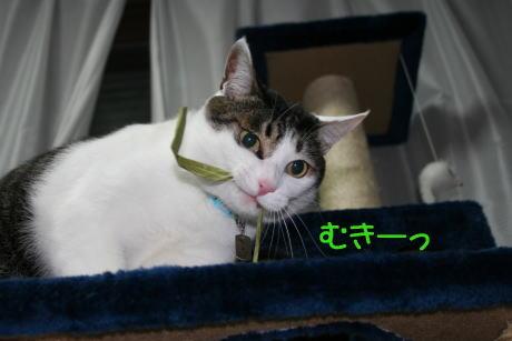 IMG_5882きじ4