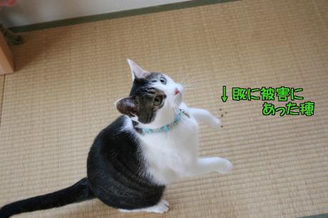 IMG_6103きじ5