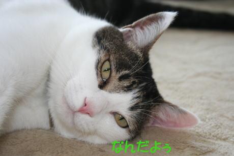 IMG_6214きじ4