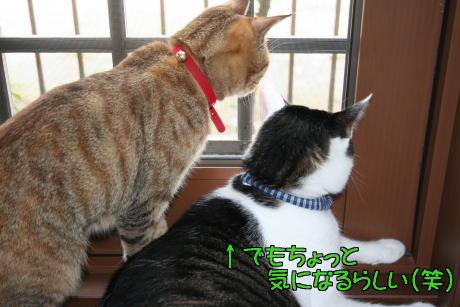IMG_6342きじ5