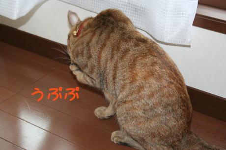 IMG_6666コムギ4