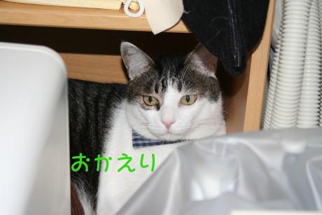 IMG_6916きじ1