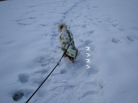 寒すぎ!でも散歩~