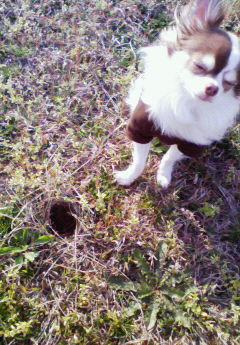 テッペイとヒバリの巣