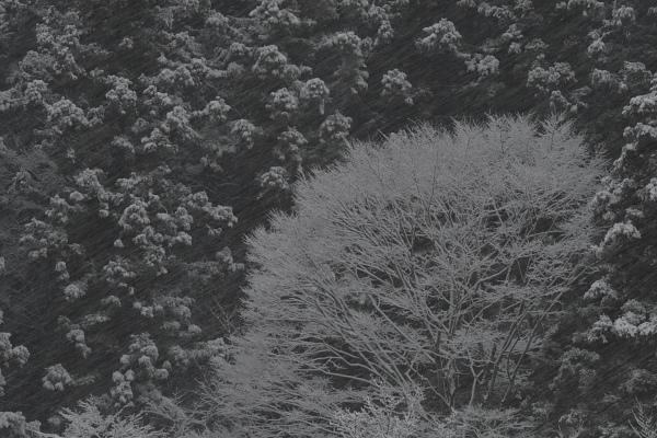 星野雪景1