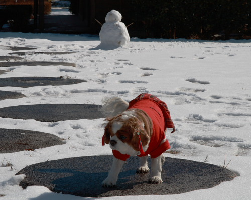 雪なんて嫌い!