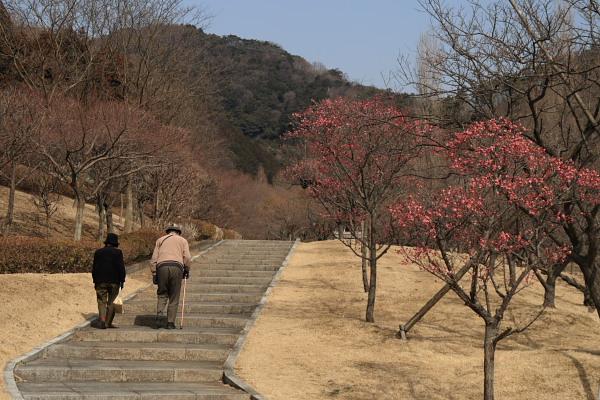 佐野梅林公園1