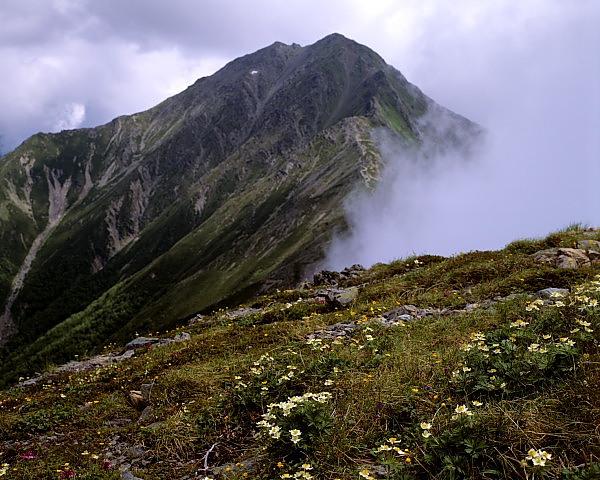 北岳とハクサンイチゲ