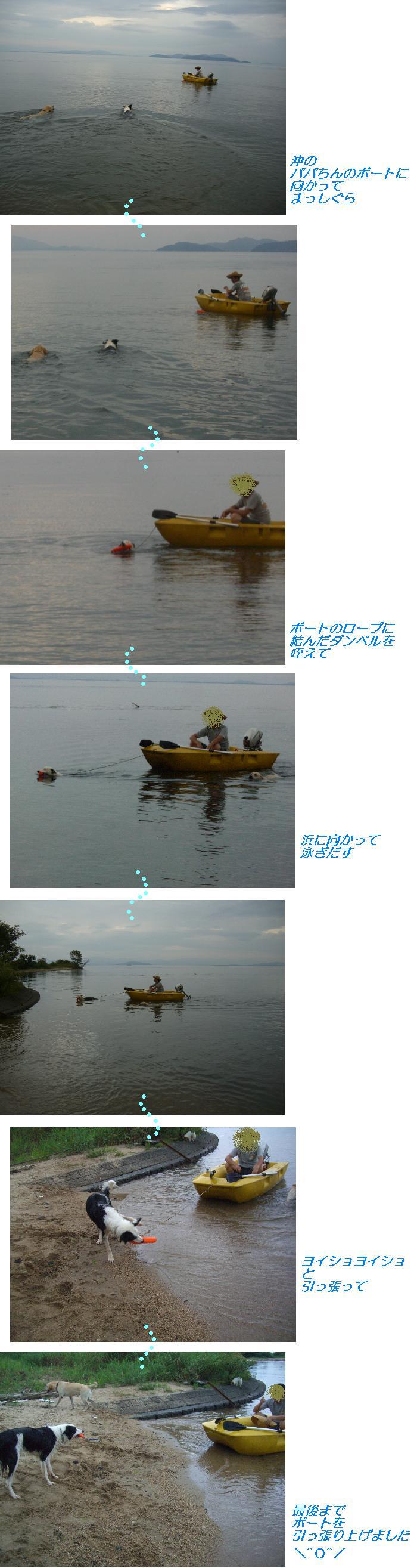 水難救助犬