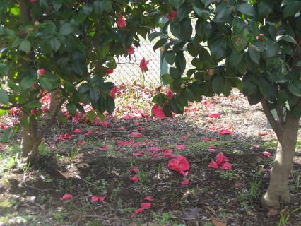 ヒミツの花園1