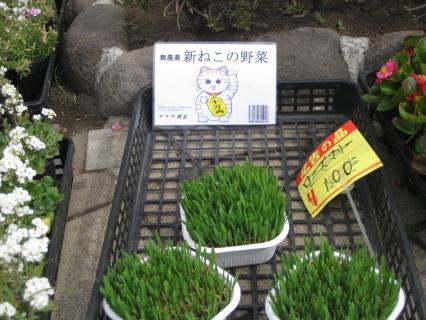 猫の野菜1