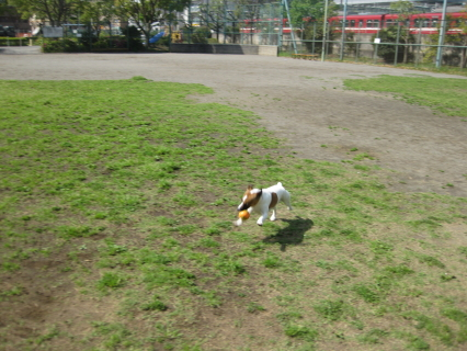 ぷうさんボールで遊んでいると