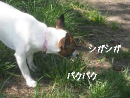 草カミカミ_1