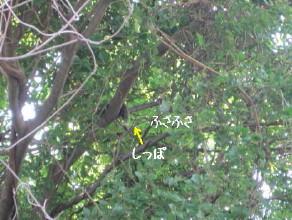台湾リス_1