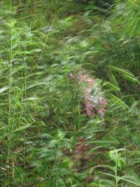 笹薮に中1