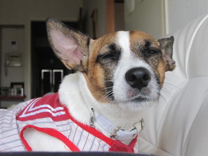 訴える犬1
