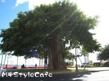 hawaii_31.jpg