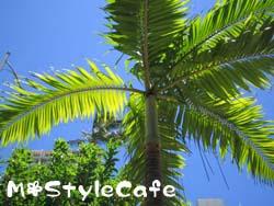 hawaii_33.jpg