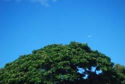 hawaii_36.jpg