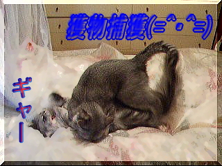 20060910161157.jpg