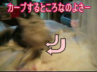 20060922150137.jpg