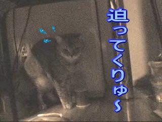 20060929151408.jpg