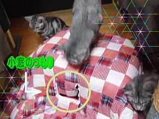20061025131545.jpg