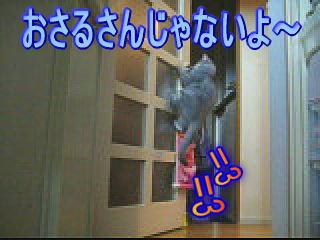 20061103154958.jpg