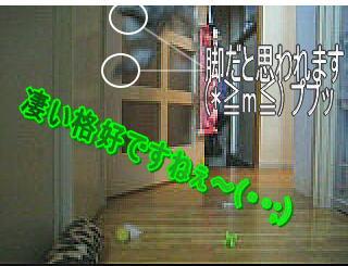 20061103155031.jpg