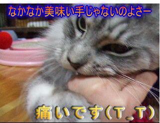 20061107152301.jpg